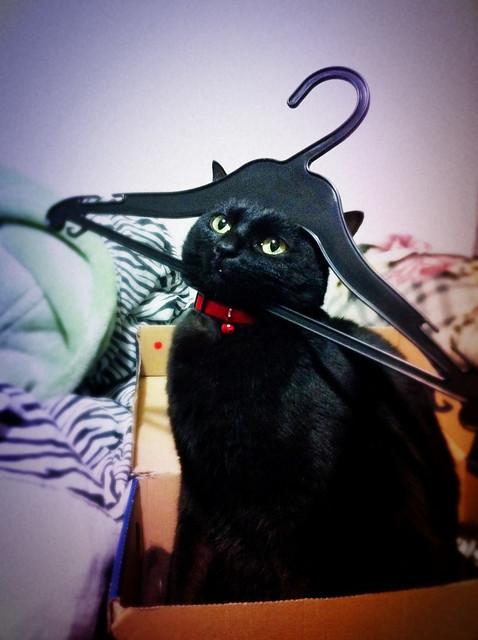 うちの猫がなんか変なんだけどお前らわかる?