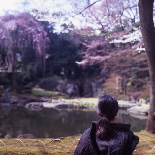 ピンクの庭園