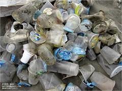 許多一次性飲料杯出現在海灘。圖片來自:清淨海洋行動聯盟。