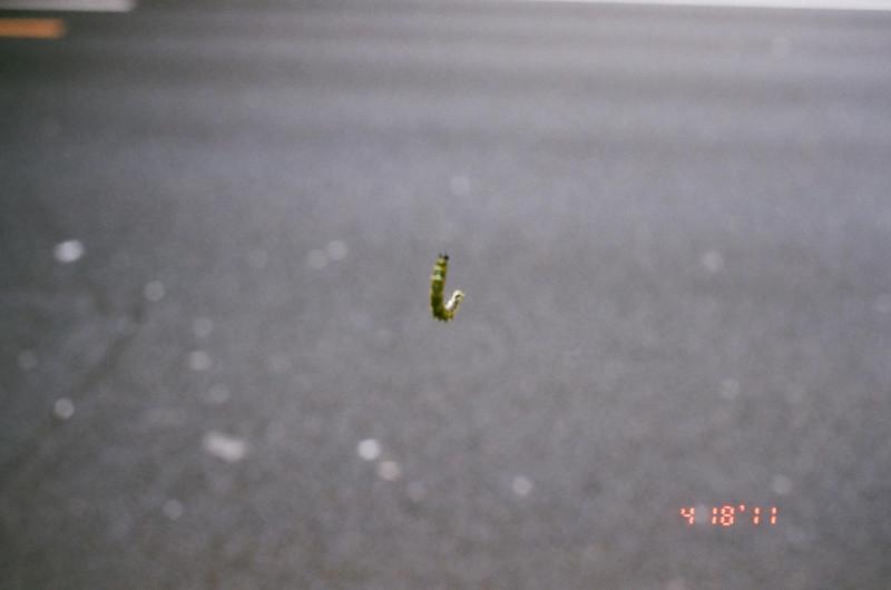 caterpillar_13