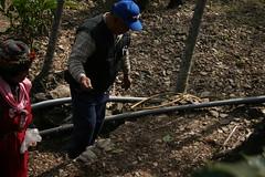巴爸爸以熟練的手勁播撒小米種原。攝影:廖靜蕙。