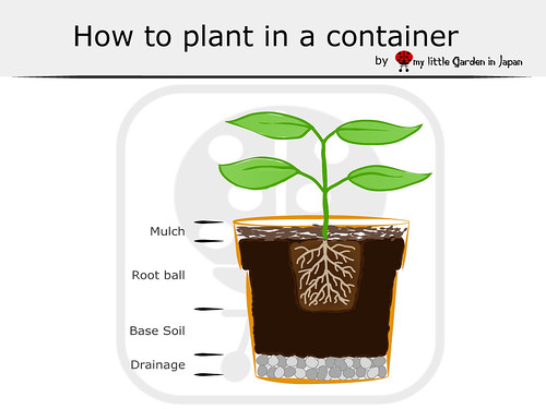 How-to-plant-in--a-container
