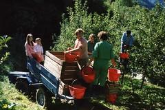 Valtellina - raccolta delle mele 15 anni fa.... (givi60) Tags: mele valtellina mazzodivaltellina raccoltamele