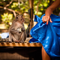 The monkey who got busted (Part 3/4), Pura Luhur Uluwatu - Bali (adde adesokan) Tags: street travel blue red bali rot apple pen indonesia photography 50mm monkey hand candid fingers streetphotography olympus ape blau fingernail apfel indonesien ep2 affe streetphotographer m43 mft mirrorless microfourthirds theblackstar mirrorlesscamera streettogs
