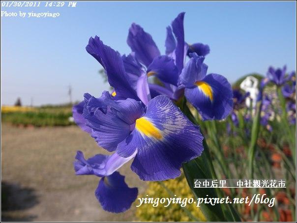 台中后里_中社光觀花市20110130_R0017617