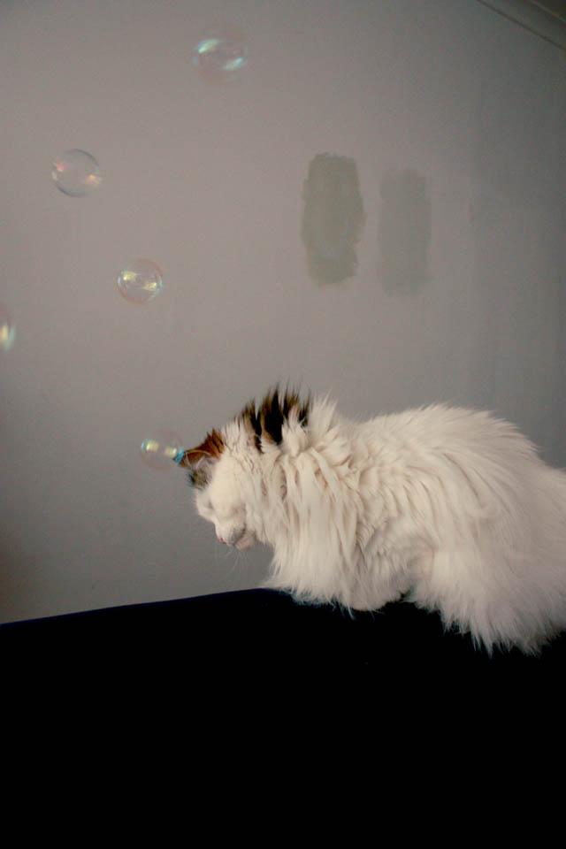 lou lou bubbles j
