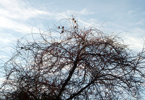 Birds_1611c