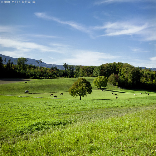 Peaceful Countryside I