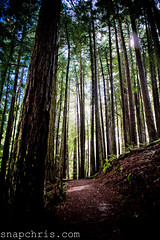 The redwoods of the Dipsea trail (tibchris) Tags: sanfrancisco green rain clouds hiking marin trail mttam mounttam mounttamalpais steepravine dipsea