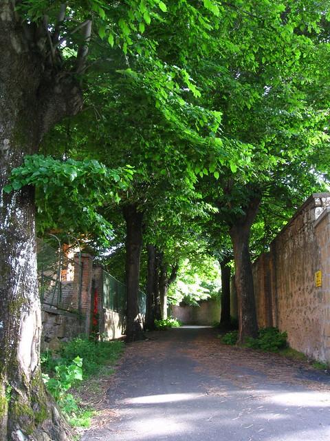 オルヴィエートの道のフリー写真素材