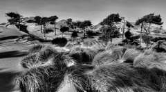 Formby Point (frazerweb) Tags: