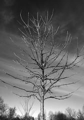 karst_farm000410 (mark mullis) Tags: sky tree clouds dark farm indiana bloomington karst