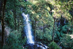 Erskine Falls (mangosteendream) Tags: trees nature forest waterfall greatoceanroad erskinefalls