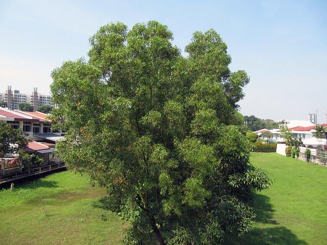 8 Jurong Line grassland
