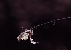 The awakening. (Elonore Chellini) Tags: nature purple awakening violet mauve awake reveil feuille branche elonore chellini