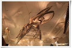 (Narwal) Tags: china city museum roc taipei   dinosauria   china republic