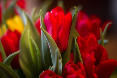 flowers-1679.jpg