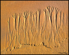 Sand forest sculpture (PhotographNI - David Milligan) Tags: trees ireland sculpture sand bbc finepix donegal nationalgeographic malin hs10 fivefingerstrand bbcnorthernireland picturesofireland photographsofireland photographni davidmilligan untiligetitright finepixhs10 bbcpictureeditingteam bbceditors bbcpictureeditors
