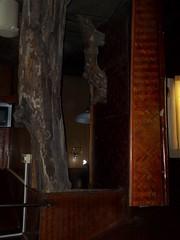 100_0183 (travellersai) Tags: kerala treehouse wayanad teaestate wildboar bandipur chital vythri banasuradam soojiparafalls streamvalleyresorts
