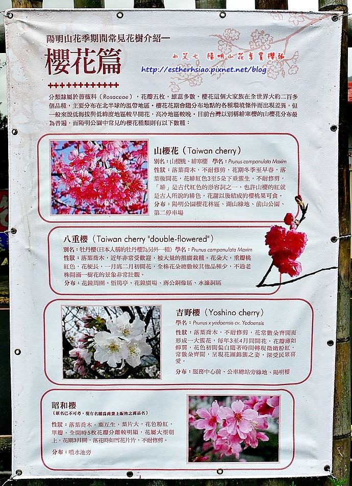 35 櫻花篇