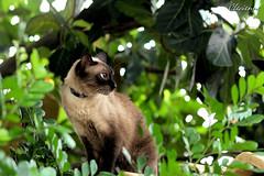 Misty Maehda (Cle e Turma) Tags: catmoments catnipaddicts