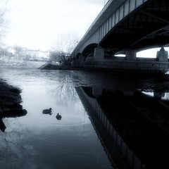 Teddy Roosevelt Island in winter (LaDawna's pics) Tags: bridge reflection water monochrome washingtondc dc ducks teddyrooseveltisland