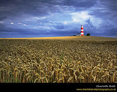 Happisburgh Lighthouse (Charlotte Brett Photography) Tags: england lighthouse field coast norfolk crop happisburgh