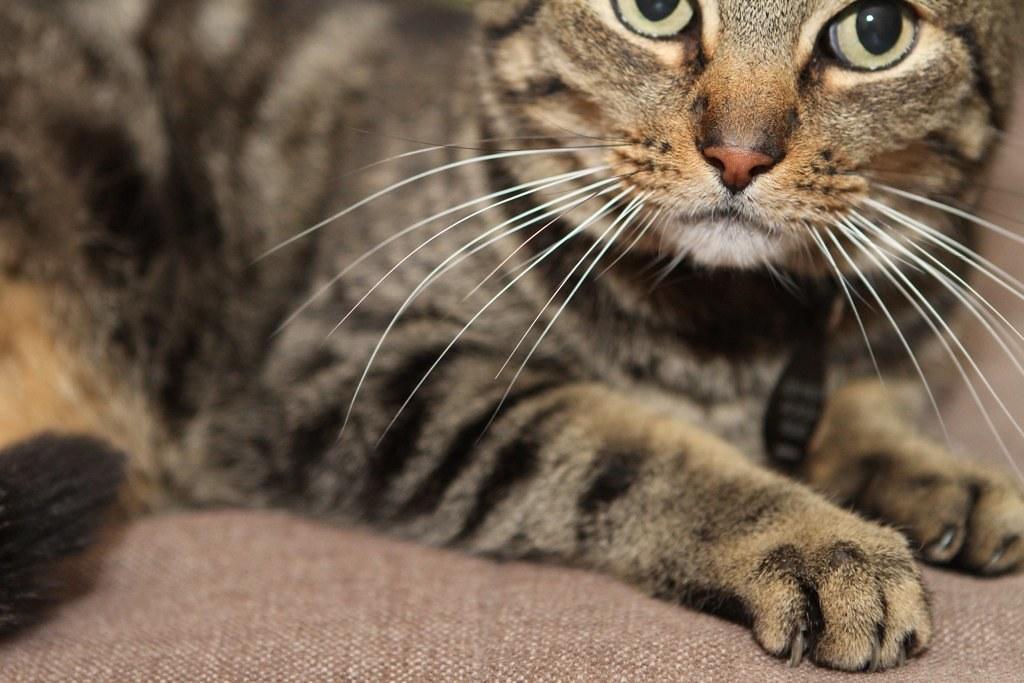 karisa's cat