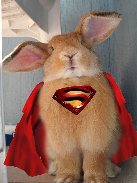 superbunny