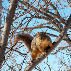 Squirrel 4 by theshutterbugeye