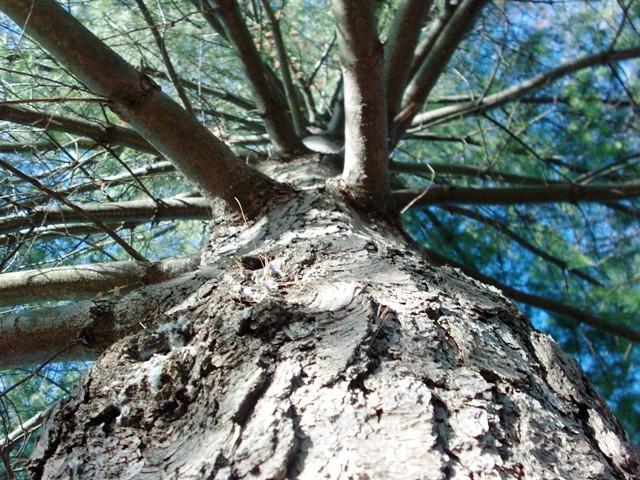 tree climbing 005