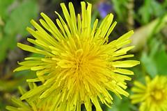 stritz-5042359.jpg (jstritz) Tags: flowers fhsp
