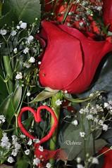 rosa e cuore (Debora Matteis) Tags: red rose rosa rosso mazzo fiorellini bunchofroses