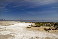 Salton Sea! (Purple 2) Tags: water salt stinks saltoncity lookspretty 225ftbelowsealevel