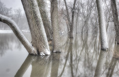 reflections in the floodplain (charlesgyoung) Tags: winter snow tree illinois pond flood hdr d3 maywood riverforest desplainesriver floodplain nikonfx doubleniceshot tripleniceshot mygearandme mygearandmepremium mygearandmebronze