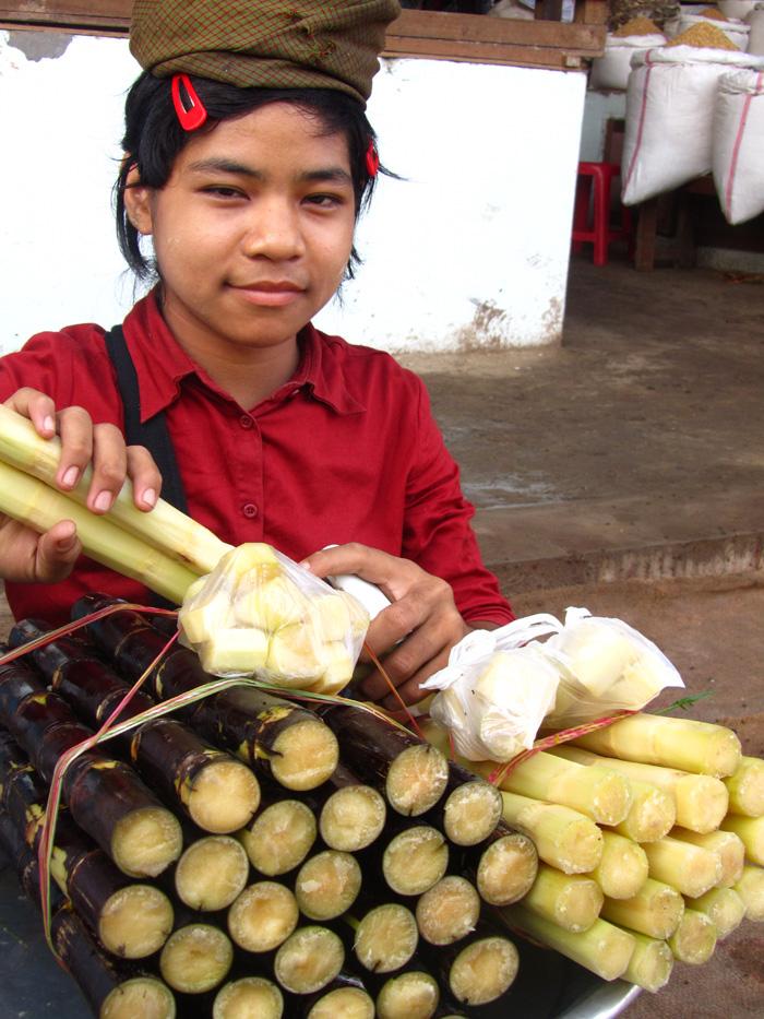 Sugar Cane in Myanmar