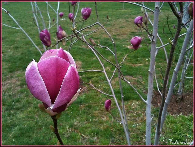 (309) Esta semana, en Misterios botánicos...