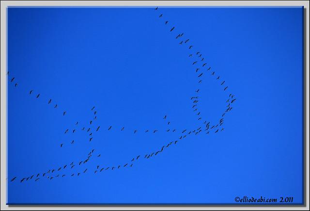 5 migración de grullas