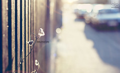 happy fence friday (Maegondo) Tags: sunset flower cars colors field canon fence germany bayern deutschland bavaria 50mm soft mood dof bokeh 14 calm lensflare friday depth creamy ingolstadt eos550d
