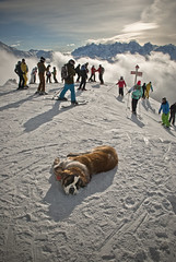A lazy St Bernard which his barrel waiting for customers. St Bernard  se lassant sur la pente de ski  Verbier, (Izakigur) Tags: dog ski alps sport alpes schweiz switzerland nikon europa europe flickr suisse suiza swiss feel sua alpen svizzera wallis stbernard lepetitprince valais thelittleprince verbier ilpiccoloprincipe lasuisse nikond200 100faves 200faves  izakigur