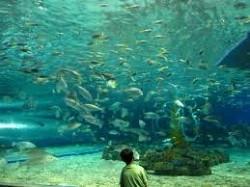 魚油-20100908143927_m