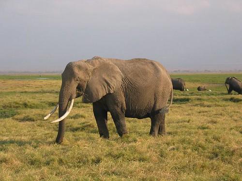 Kenya Adventure Safari,KENYA CULTURAL TOURS AND WILDLIFE SAFARIS,kenya lodge safaris,africa wildlife safaris experience kenya tanzania, budget camping safaris,Adventure Kenya