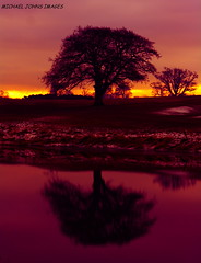 MAGENTA  SKIES (michaeljohnsimages) Tags: camera trees ireland light sunset shadow sky dublin orange sun lake black colour reflection tree art nature wet water grass silhouette yellow clouds forest canon river landscape dawn photo flickr ray shine view candid super silouette best explore reflect journey day203 day204