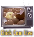Chick Cam Live Logo