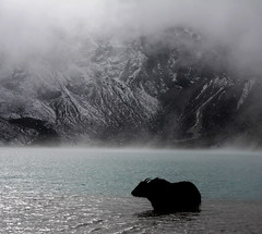 Frosted Lake (cormend) Tags: travel blue nepal yak cloud mist mountain snow mountains cold nature water animal trekking trek canon landscape eos asia hiking hike trail khumbu chill himalayas frosted gokyo 50d gokyori cormend lpfrozen