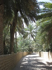 Al Ain oasis (felibrilu) Tags: oasis alain
