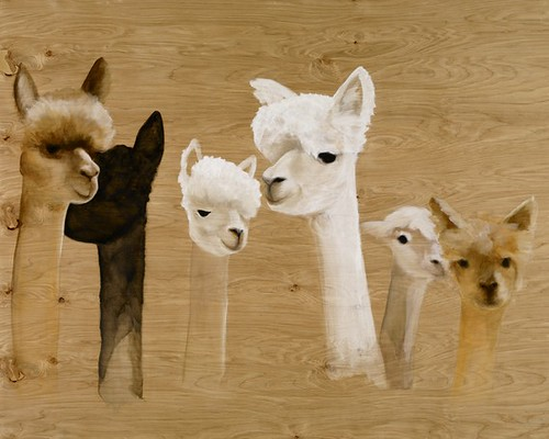 Gang of Alpacas by Jillian Kliewer jilliBird