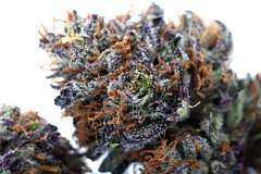 the Purps (gandalfphoto) Tags: macro canon photography high weed colorado smoke 420 pot stoned bud marijuana maryjane cannabis gunbarrel ganja 500d dispensary thegreendream thepurps t1i jacobgduncan gandalfphoto hdweed