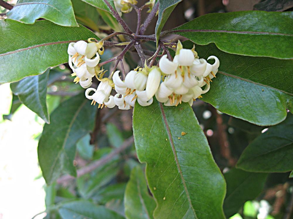 19-03-2011-flower-fantastic-scent2