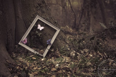 'Imagination will often carry us to worlds that never were. But without it we go nowhere' -  Carl Sagan (*iNiNa* Tracey Christina Photography) Tags: trees tree nature leaves forest woods dream butterflies frame imagination